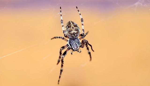 Attrapes araignées les meilleurs de 2020