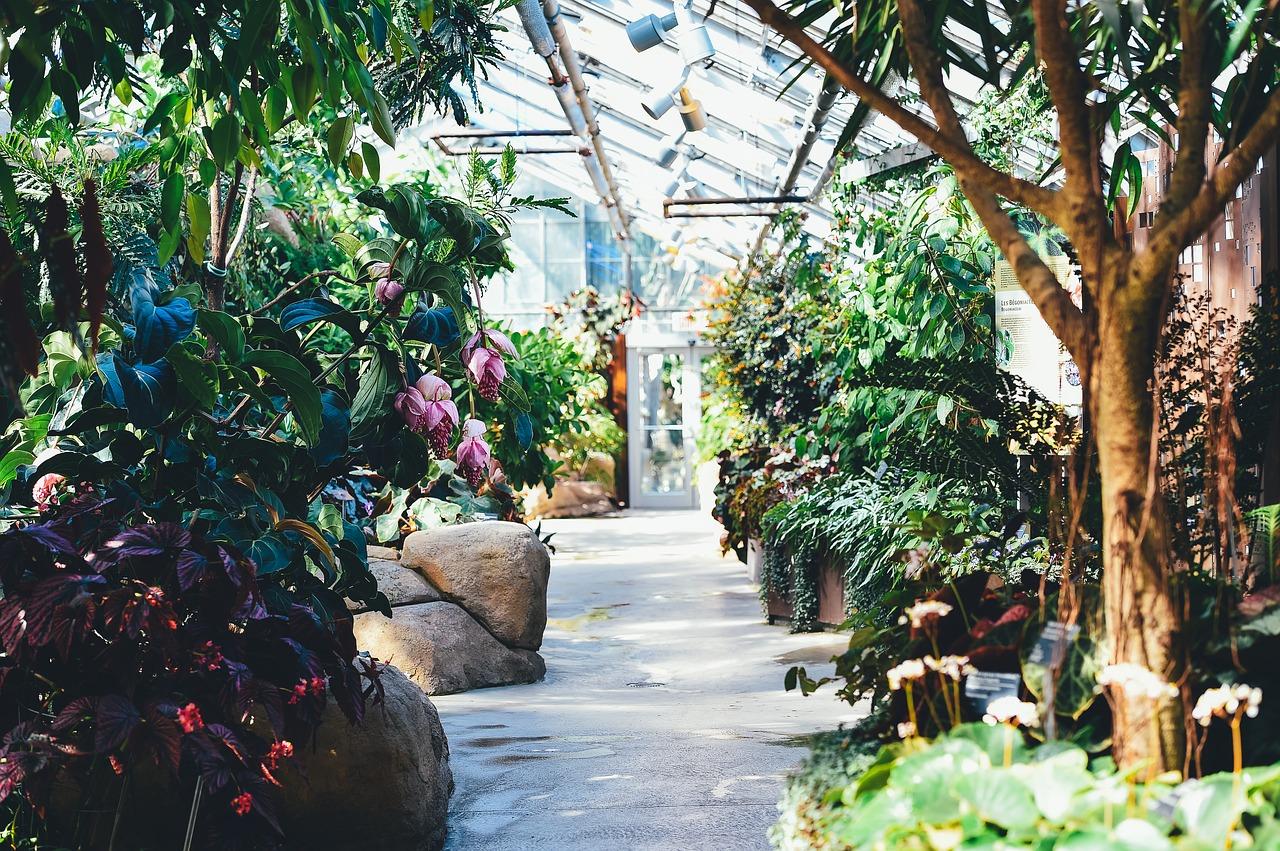 Serre de jardin les meilleurs de 2020